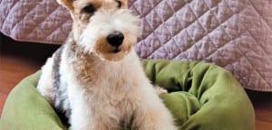 Cama de perro DIY