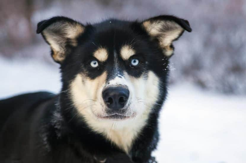 Perro sin vacunarse