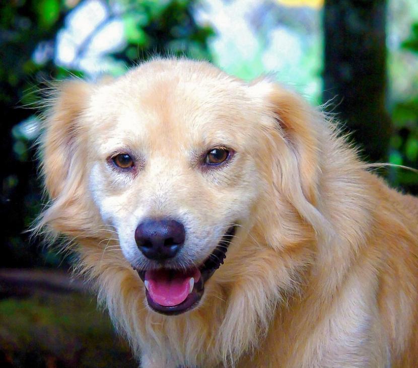 Perro recién vacunado