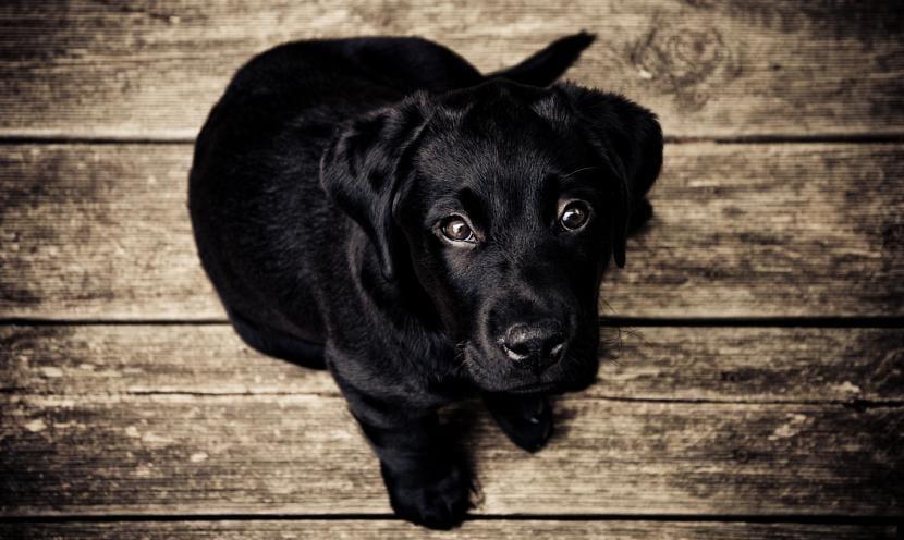 Vacunas de perros