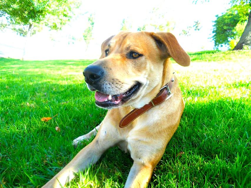 2-trucos-sencillos-para-integrar-un-perro-nuevo-en-un-hogar-2