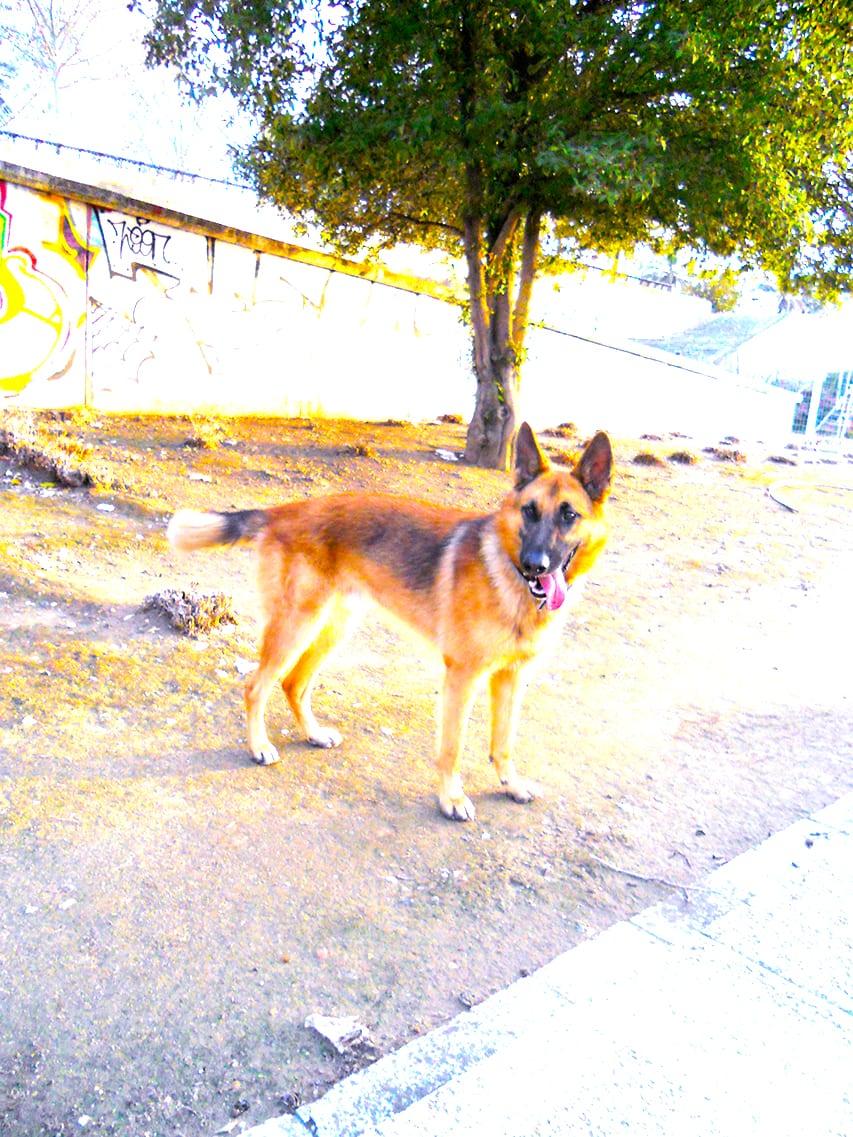 aprenda-a-pasear-con-su-perro-relajado-mediante-la-técnica-del-arbol-