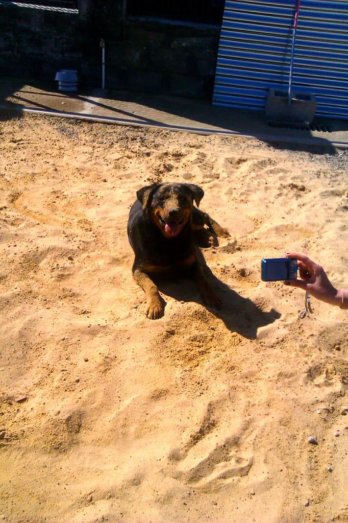 como-enseñar-a-mi-perro-a-ser-obediente-2
