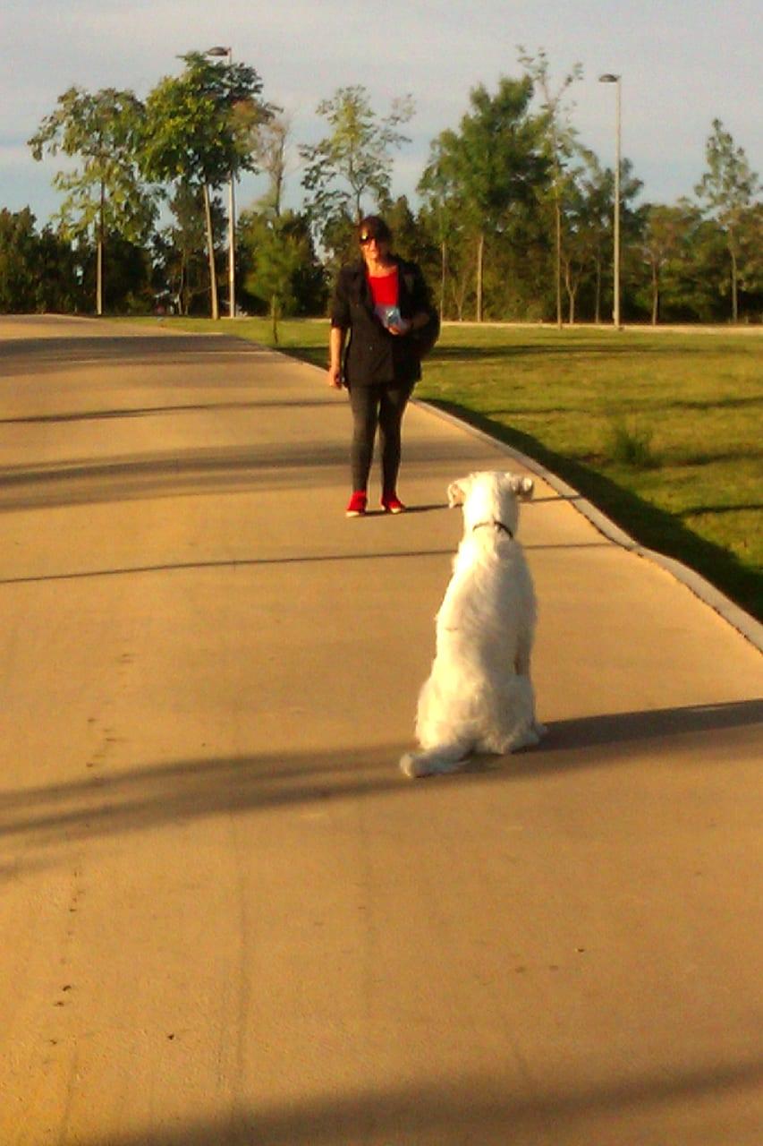 como-ser-un-lider-para-tu-perro-en-4-sencillos-pasos-1