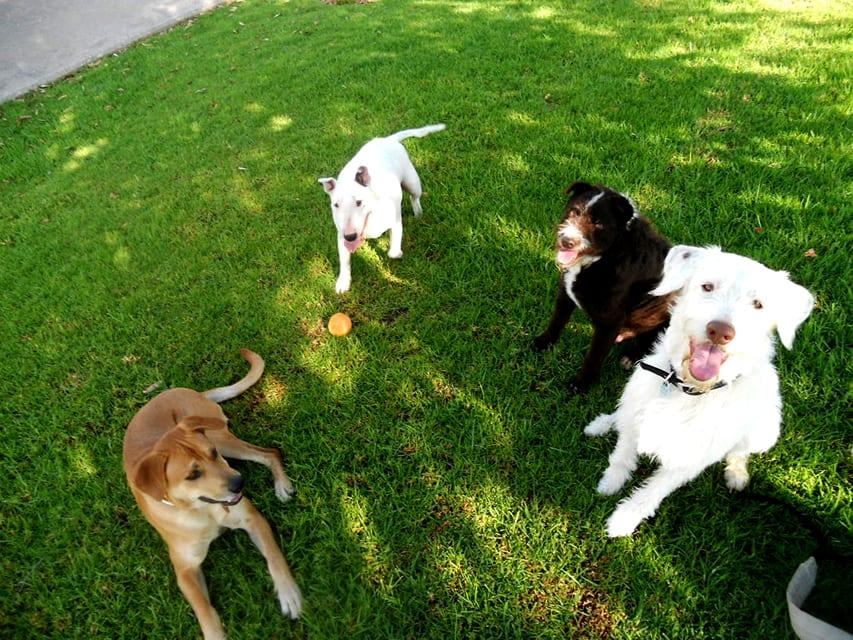 comunicacion-y-relaciones-entre-hombre-y-perro