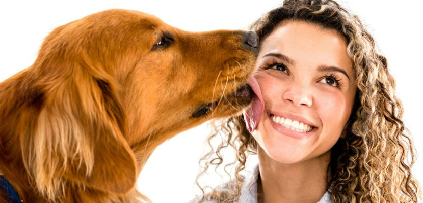 Lametones de perro en la cara