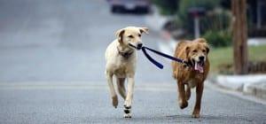 Pasear a dos perros a la vez