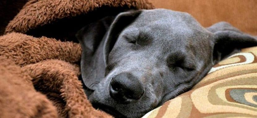 Cuidados básicos en perros mayores