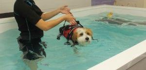 Perro en una sesión de hidroterapia.