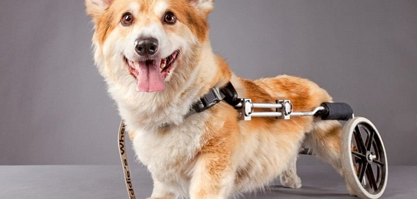 Artículos para perros discapacitados
