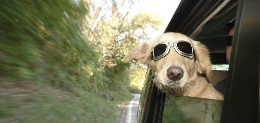 Eliminar el olor a perro en el coche