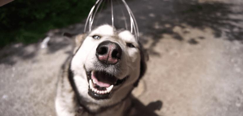 Masajes terapéuticos en perros