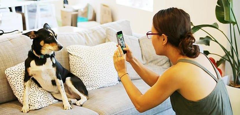 Apps para sacar fotos al perro como Barkcam