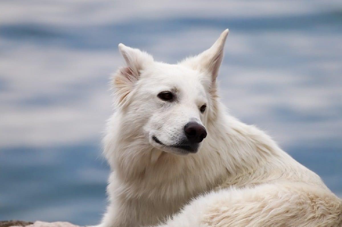 Los perros oyen mejor que los humanos