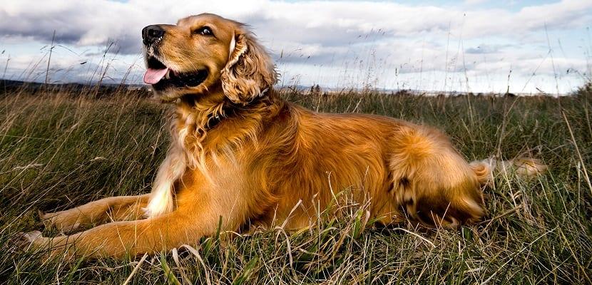 Productos ecológicos para perros