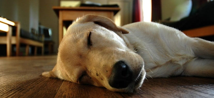 Descanso perruno