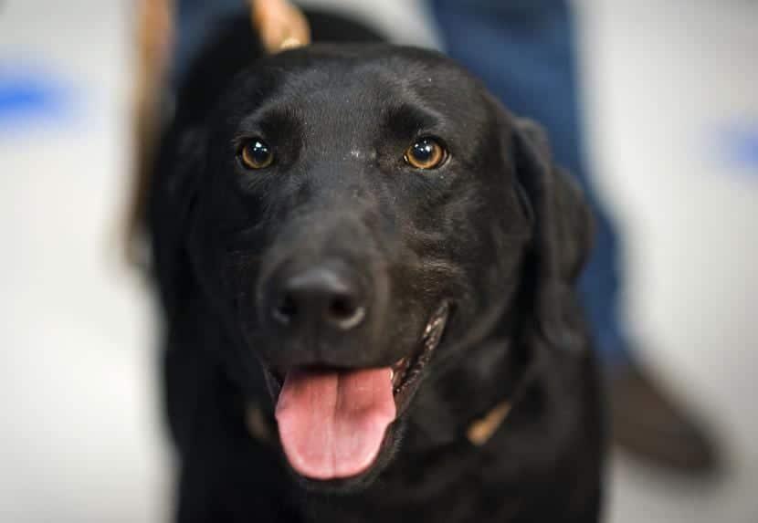 Soñar con un perro de color negro