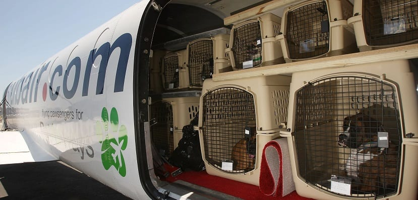 Viajar en avión con perros