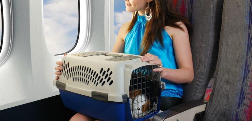 Mujer viajando con su perro en un avión.