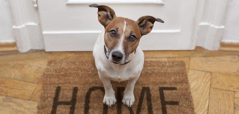 Consejos para ahorrar con el perro