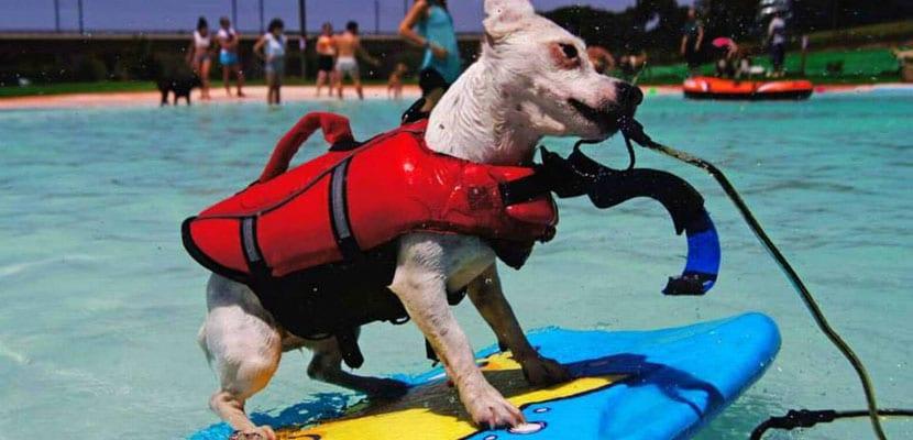 Aquapark canino