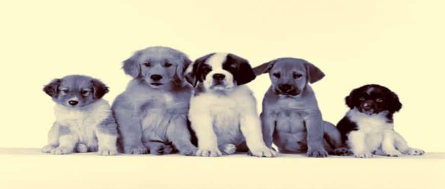 educando-a-nivel-emocional-como-escoger-a-nuestro-perro-ideal-