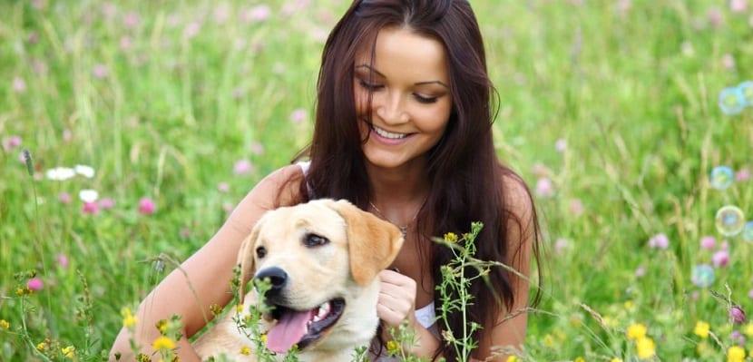 Estudio de perros y mascotas