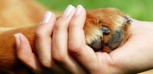 Pata de perro junto a una mano humana.