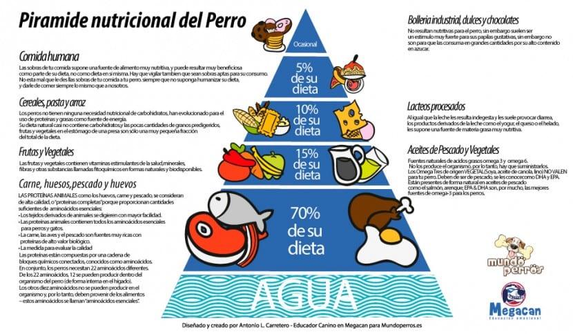 Piramide-Nutricional-de-un-Perro