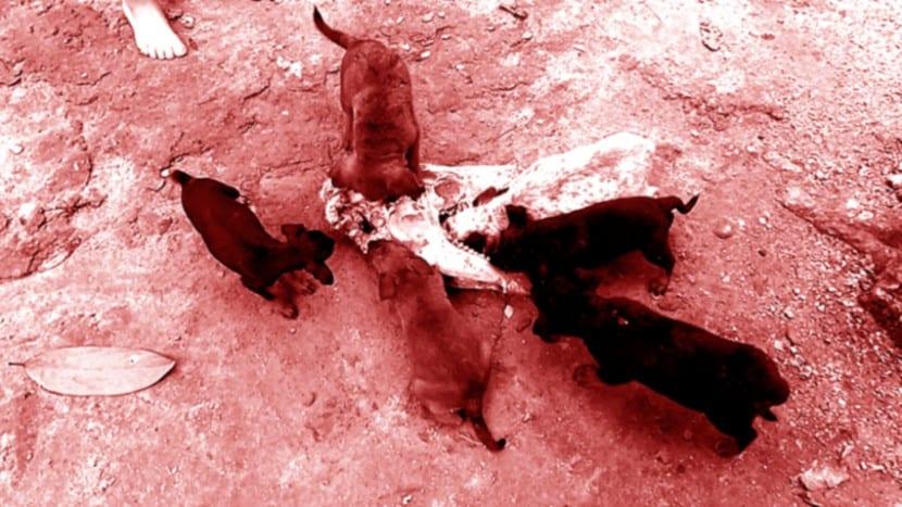 guia-de-alimentacion-canina-mundo-perros-