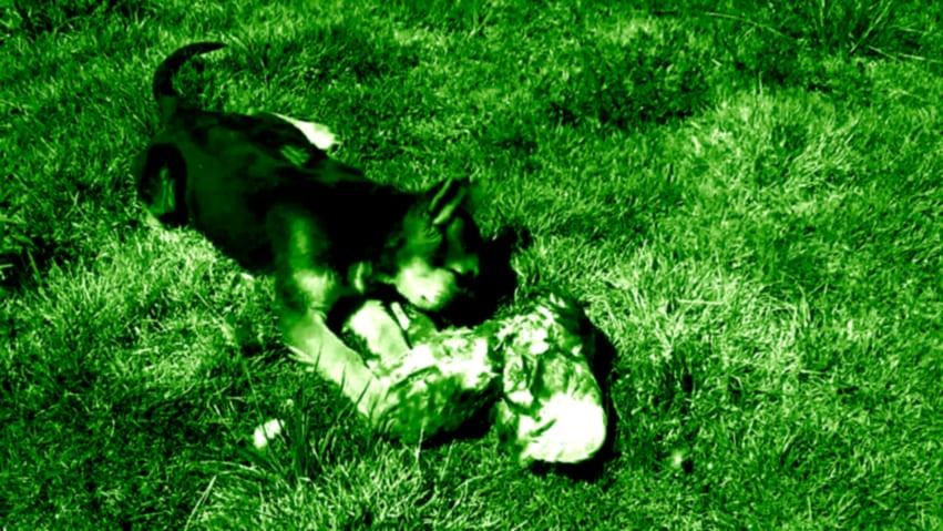 guia-de-alimentacion-canina-mundo-perros-5