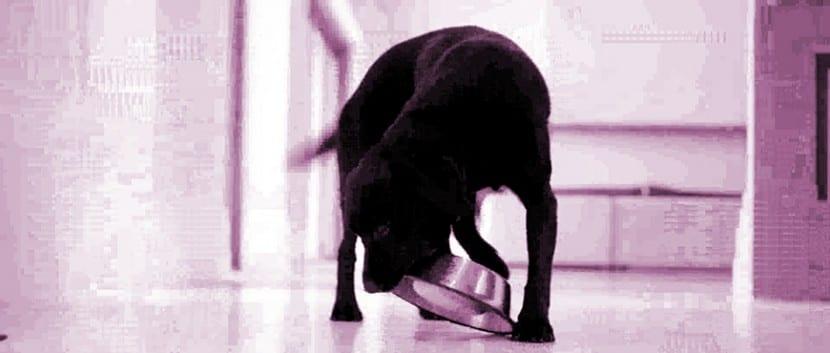 los-perros-y-el-estrés-alimenticio- (10)