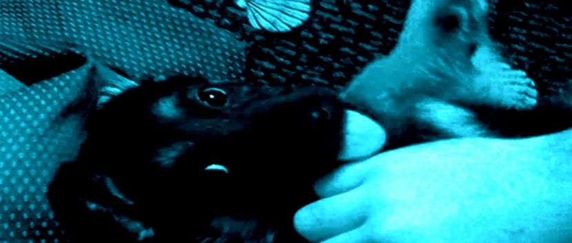 los-perros-y-el-estrés-alimenticio- (11)