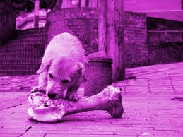 los-perros-y-el-estrés-alimenticio- (6)