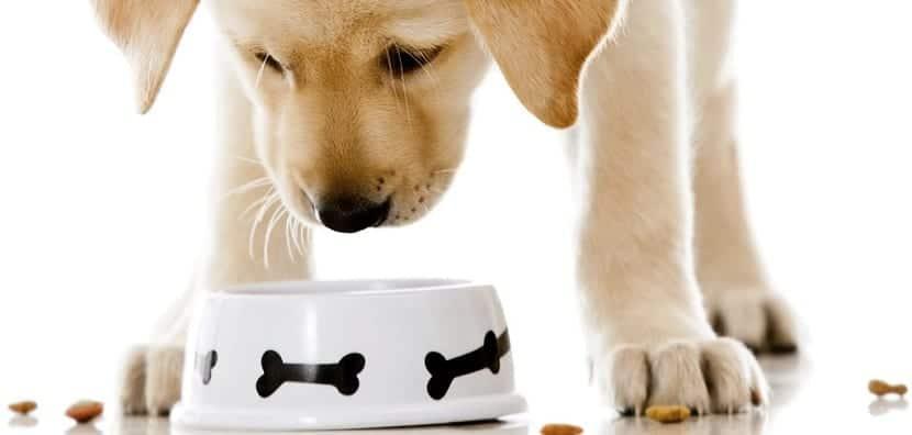 Pienso o latas qu es lo mejor para mi perro for Mejor pienso para perros