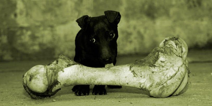 5-Recetas-de-comidas-caseras-para-perros-sanos.2jpg
