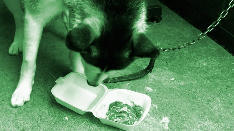 5-Recetas-de-comidas-caseras-para-perros-sanos