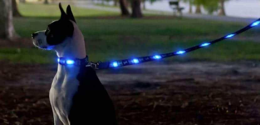 Perro con una correa luminosa.