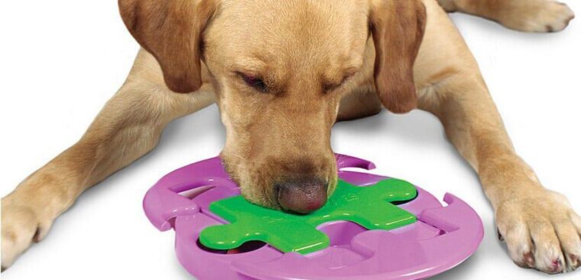 Puzles para perros