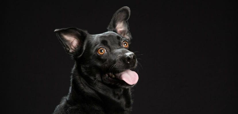 Perro negro en una fotografía de Fred Levy.