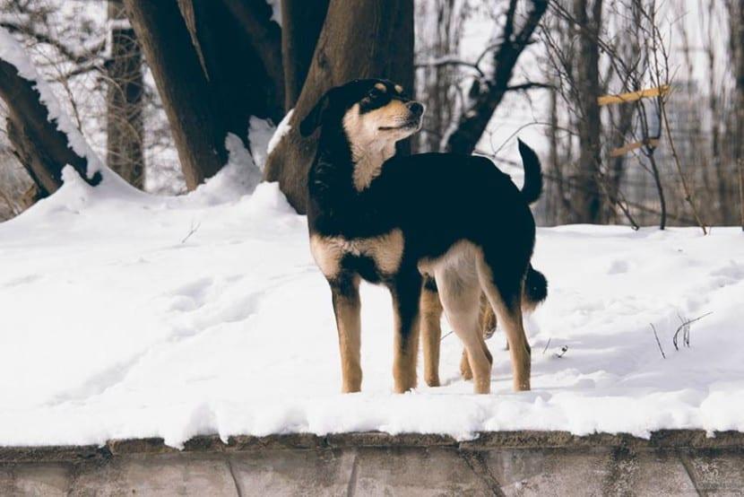 Quien-dice-que-los-perros-no-tienen-sentimientos-2