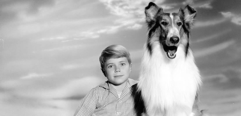 Fotograma de la serie Lassie.