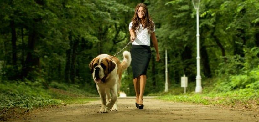 Pasear con el perro