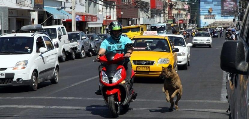 Evitar que el perro persiga vehículos