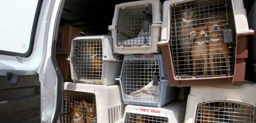 Perros hacinados en jaulas.