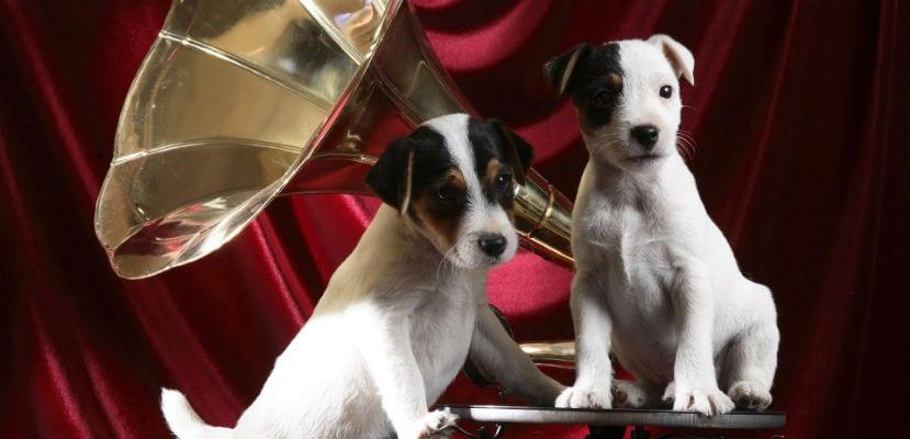 Dos cachorros junto a un gramófono.
