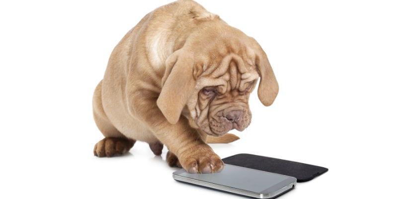 Perro jugando con un teléfono movil.