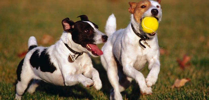 Jugar con la pelota