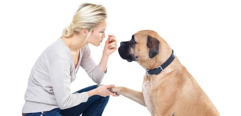Premios de comida para perros