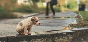 Perro abandonado en la calle.